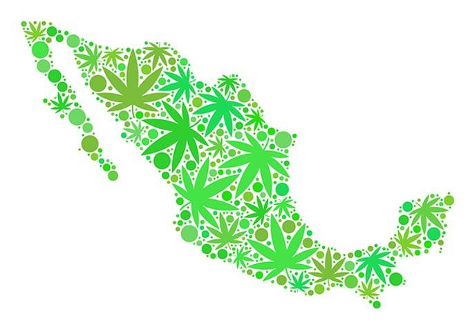 bigstock-royalty-free-marijuana-mexico--247125277.jpg