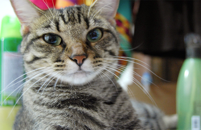 Of the 672 cats Hermitage Cat Shelter took in throughout 2018, 643 were adopted.