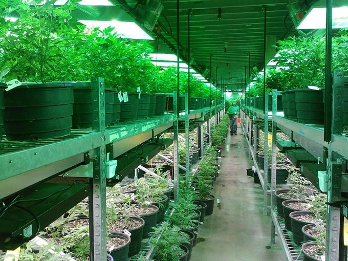 marijuana-269851_1280.jpg