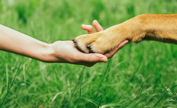 bigstock-dog-paw-and-human-hand-are-doi-66464341.jpg