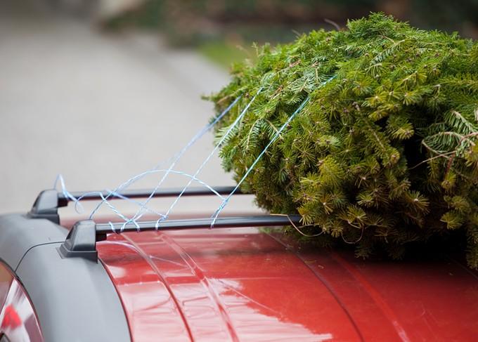 bigstock-christmas-tree-on-roof-of-car-6521909.jpg