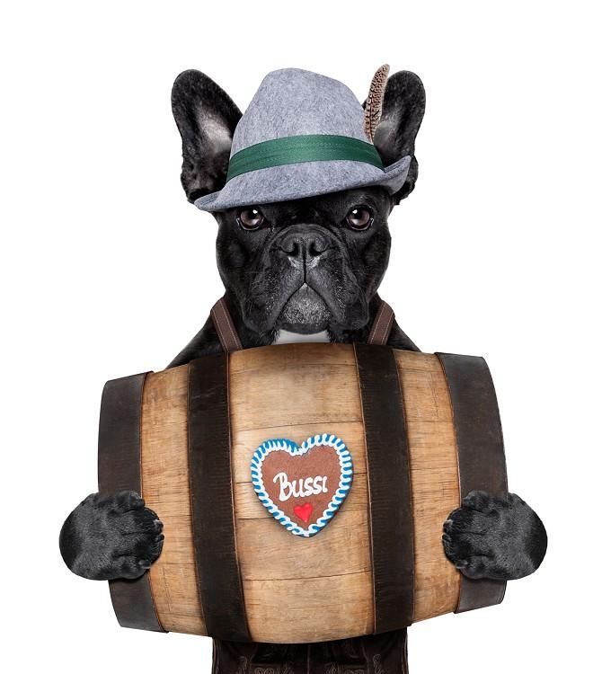 bigstock-bavarian-dog-68644795.jpg
