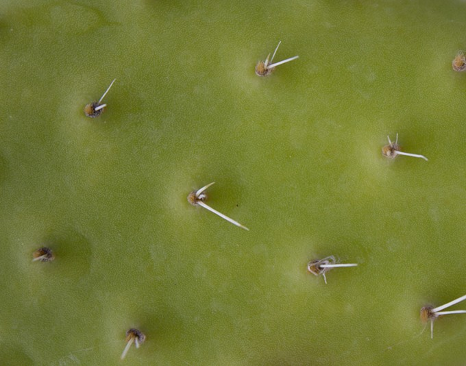 bigstock-thorns--spikes-on-cactus-plan-111925793.jpg