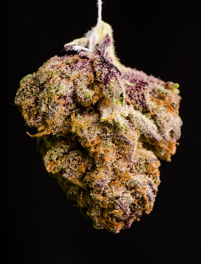 bigstock-twisted-purple-og--111982724.jpg