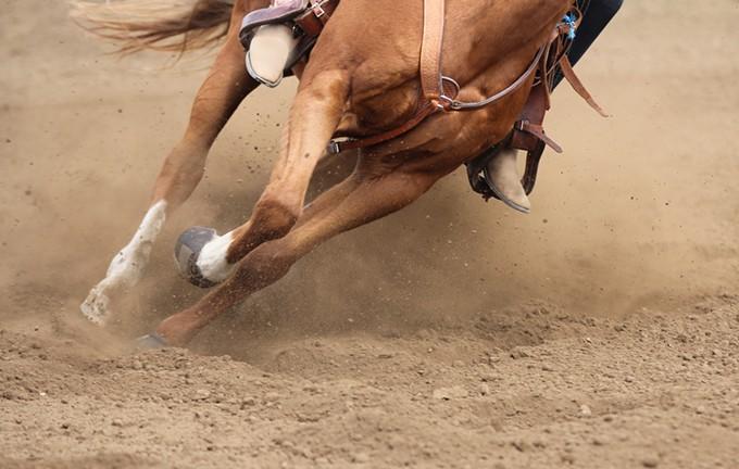 bigstock-a-galloping-horse--113420288.jpg