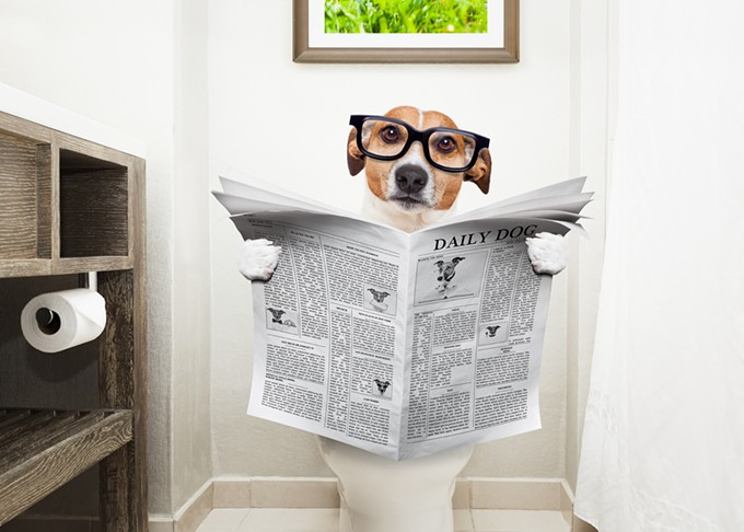 bigstock-dog-on-toilet-seat-reading-new-147088664.jpg