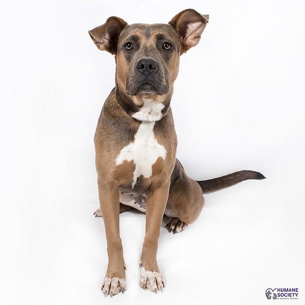 Caddy the dog - HSSA