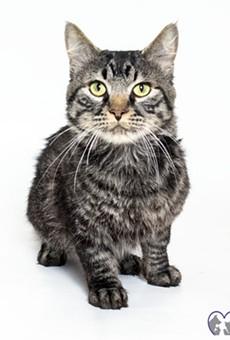 Paulie the cat