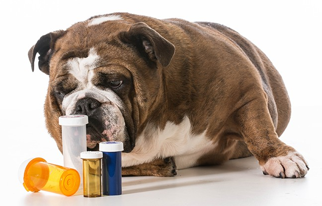 bigstock-dog-laying-beside-several-pill-66114874.jpg