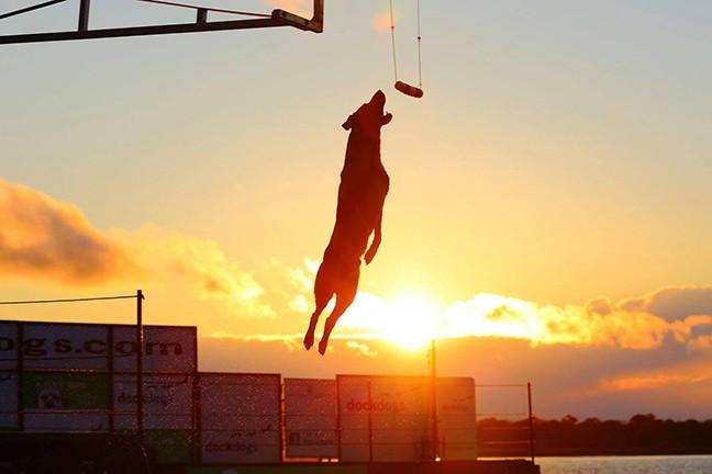 Dog Days of Summer - COURTESY