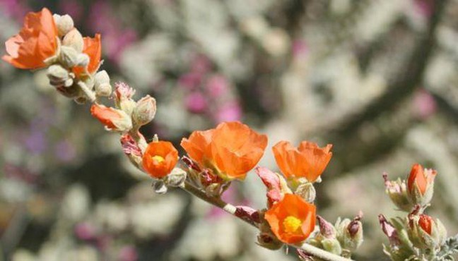 mothers_day_wildflower_plant_sale.jpg