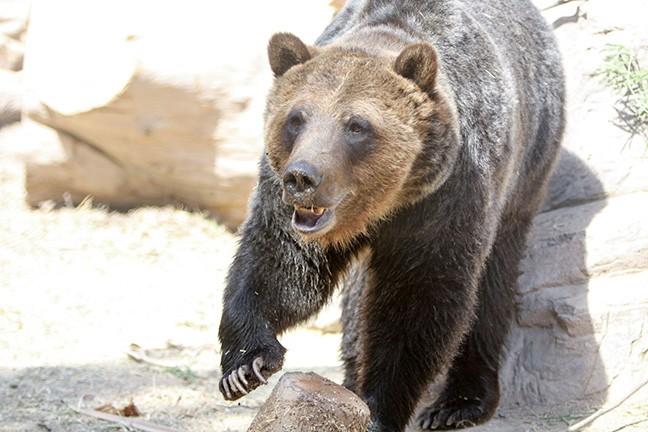 Learn about animals at Reid Park Zoo's Summer Safari Nights. - LOGAN BURTCH-BUUS