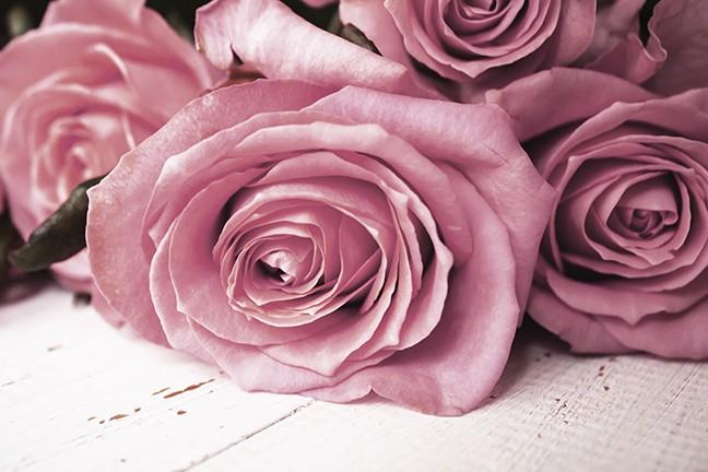 bigstock-beautiful-rose-flower-in-garde-275320174.jpg
