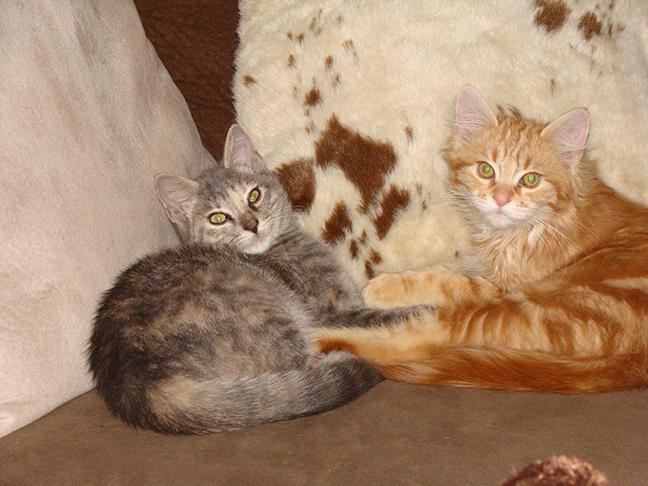 Therapy kittens, Smokey and Bandit