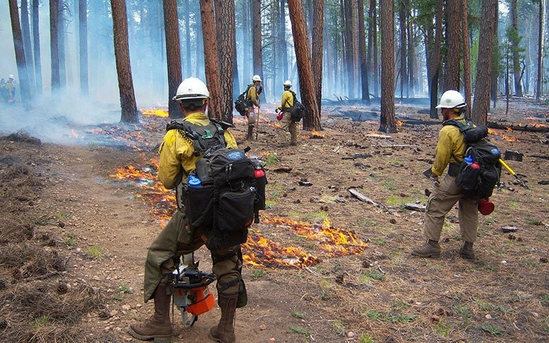 Firefighters burn out an area in this 2014 file photo of a blaze near the Grand Canyon. State forestry officials said Arizona experienced an unusually high number of wildfires in 2020, that have burned almost 955,000 acres so far. - NATIONAL PARK SERVICE