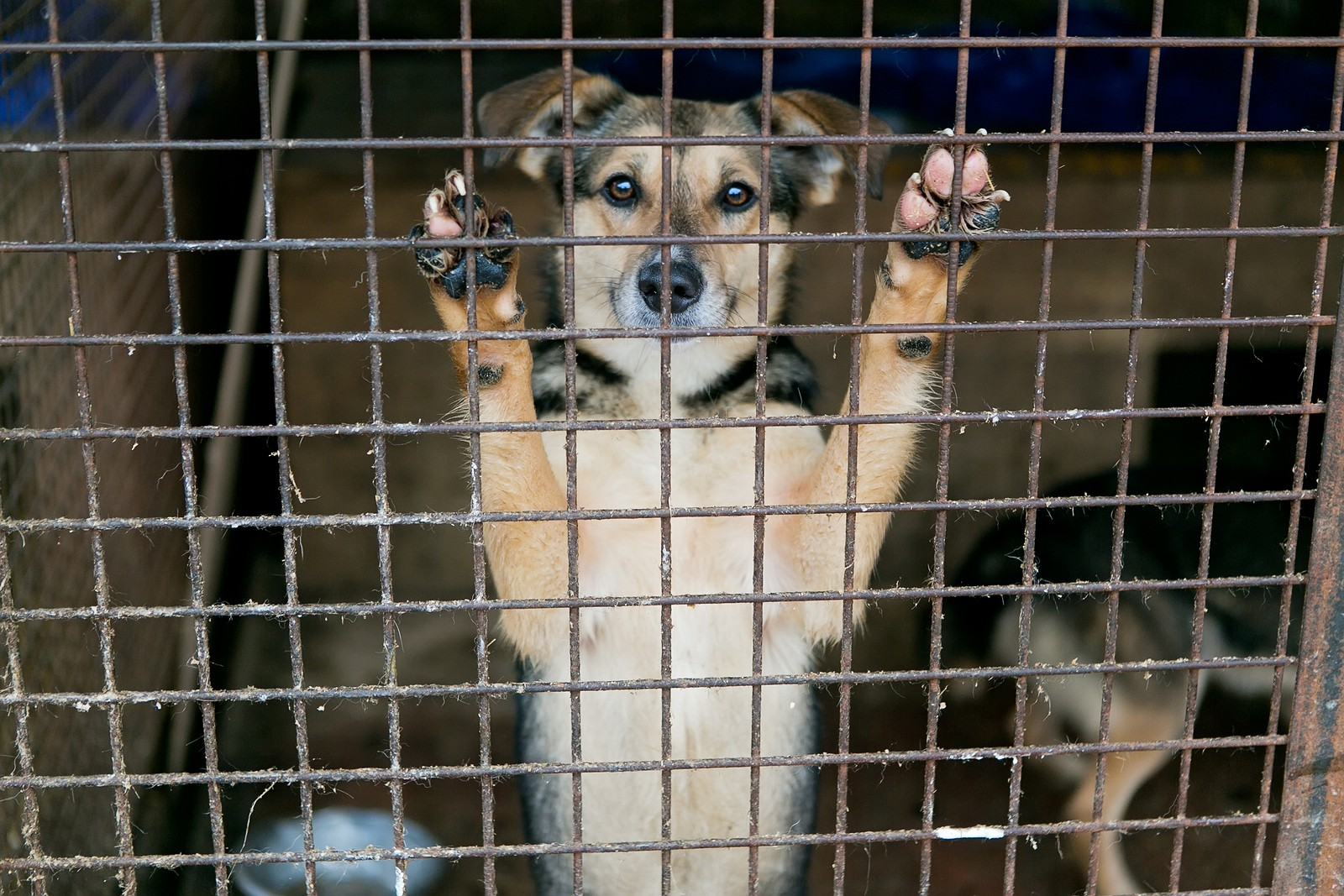 Updated: Looking for a New Pet? Forgo the Puppy Mills at