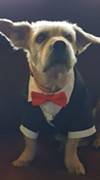 Multi Media Account Executive Lisa's dog looks handsome in a tuxedo.
