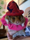 Web Editor Tirion's hamster Tony posed for a photo before trying to eat his hat.