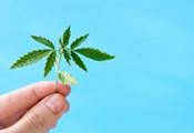 Marijuana Momentum