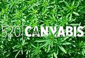 Marijuana Memories