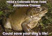 Colorado River Toad Avoidance Training