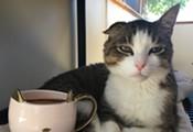 Pop-Up Cat Cafe