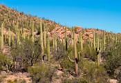Queen of Cactus