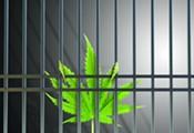 In Defense of Marijuana