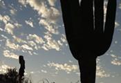 Desert Spine