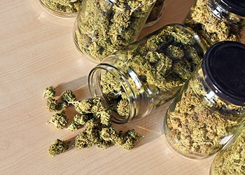 Medical Marijuana: Strong Stuff