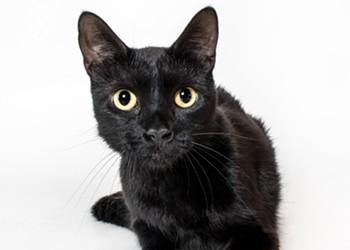 Adoptable Pet: Beauty Needs a Home