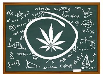 Cannabis on Campus