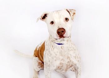 Adoptable Pets: Chloe Needs a Home