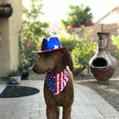 Best Dressed Pets 2019