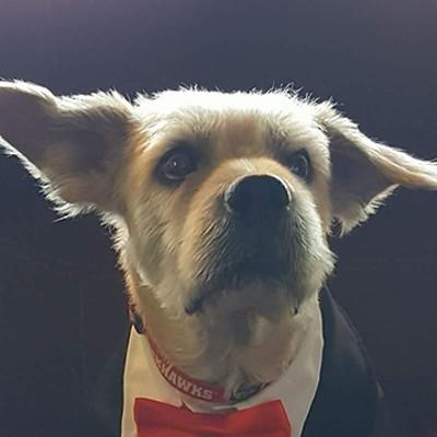 Tucson Weekly Pets
